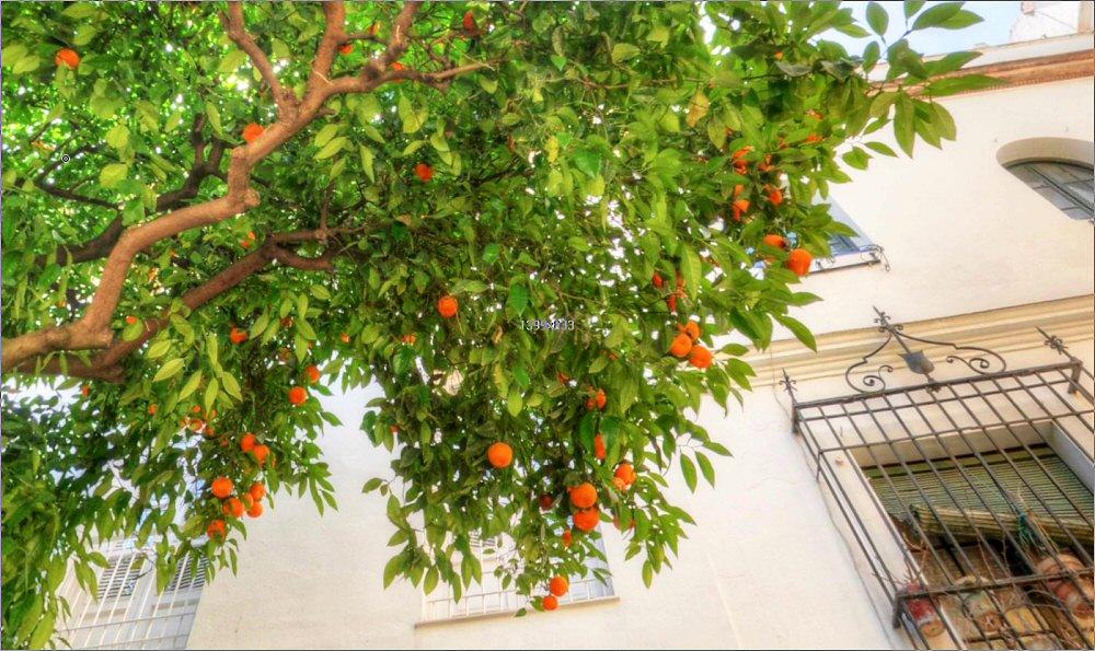 Panoramas made in spain andalusia - Garden center sevilla ...